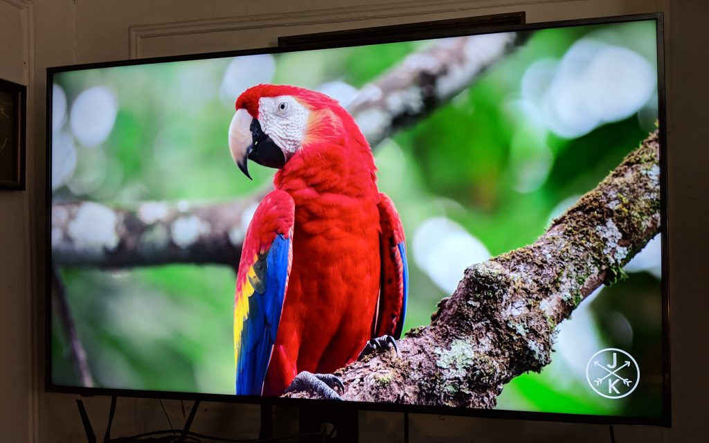Hisense TV with image of parrot
